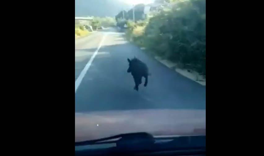 VIDEO Vepar na cesti u Bijelom Viru